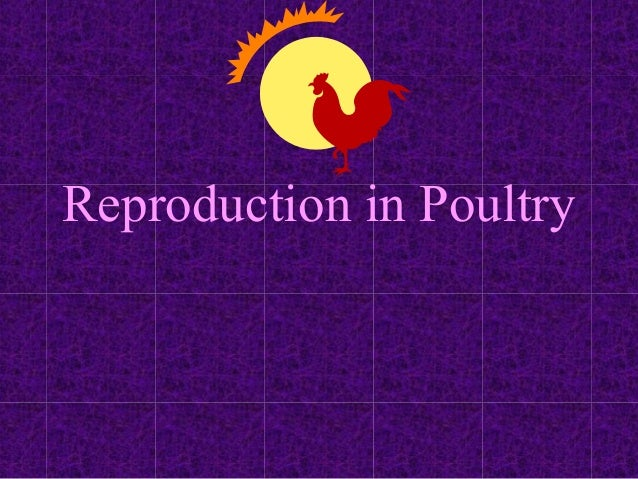 time-viable-sperm-in-female-poultry