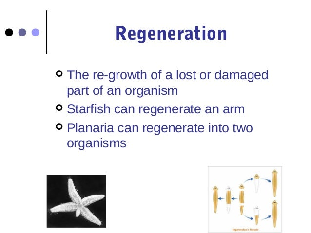 regeneration coursework questions Got a tricky question receive an answer from students like you try us let us find you another coursework on topic municipal regeneration for free.