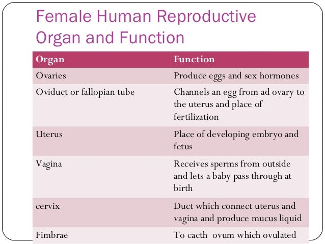 male and female reproductive systems structure and functions 38 describe the structure and explain the function of the male and female reproductive systems male reproductive system testis- produce sperm cells, they are stored in the epididymus.
