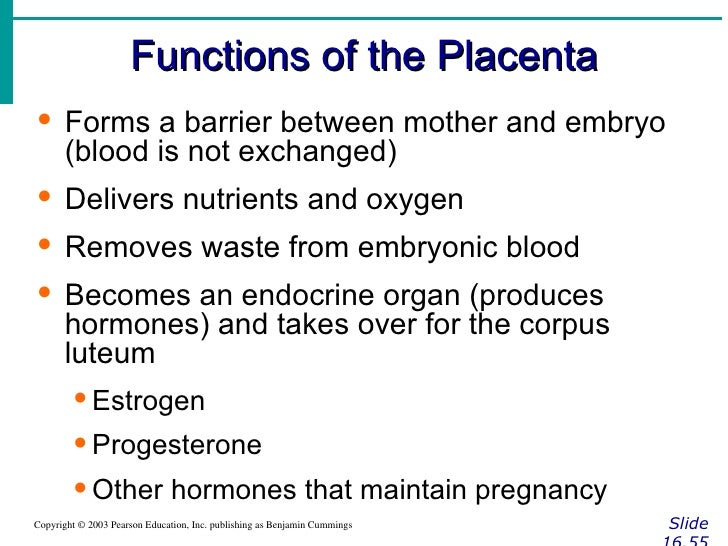 Essay on the Classifications, Types and Functions of Placenta | Essay