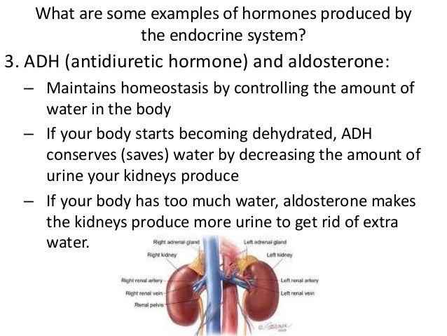 Reproductive and endocrine systems 16 what are some examples of hormones produced by the endocrine system ccuart Choice Image