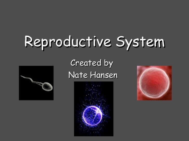 Reproductive System Created by  Nate Hansen