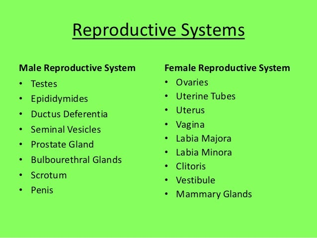 Reproductive SystemsMale Reproductive System   Female Reproductive System• Testes                   • Ovaries• Epididymide...