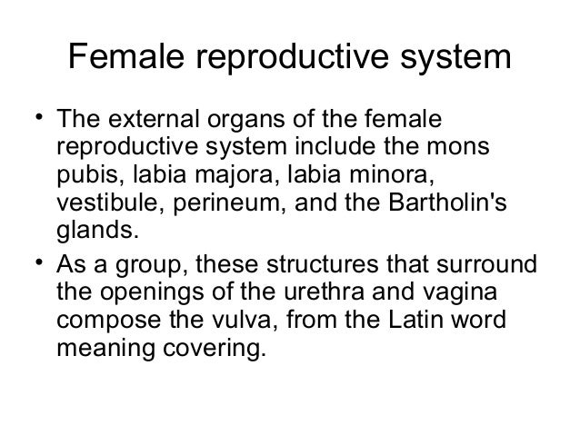 Reproductive anatomy physiology female reproductive system ccuart Images