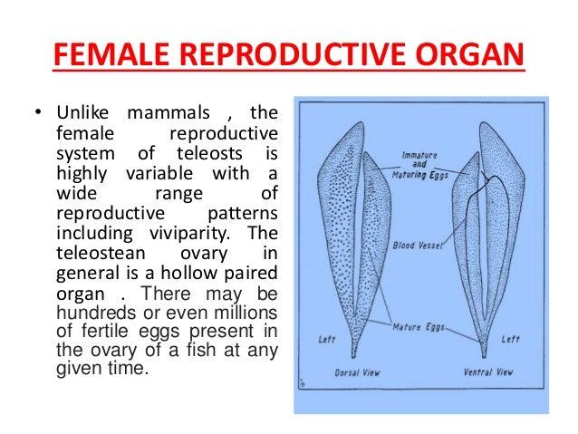 t s  of mature ovary