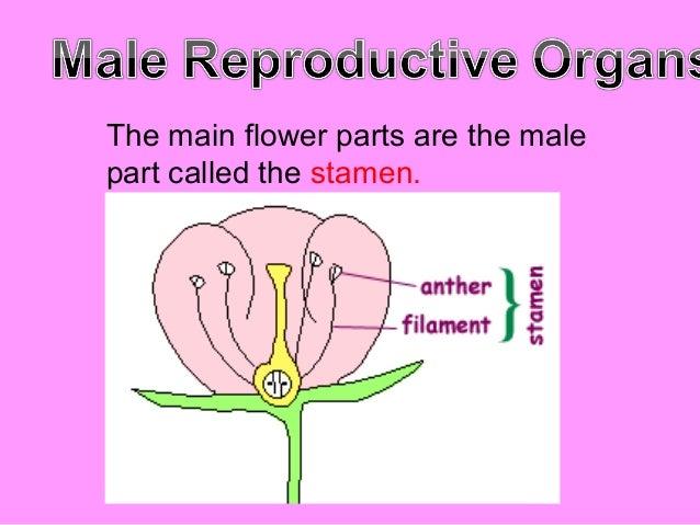 Reproductive parts of plants- J.Dael