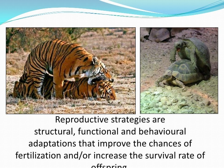 Budding asexual reproduction facts on tigers