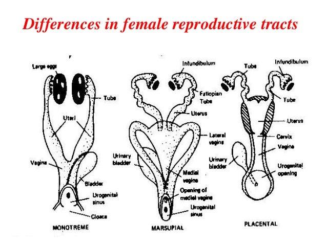 reproductive strategies in mammals