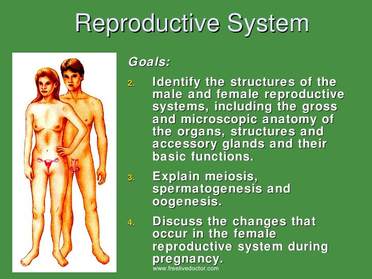 Reproductive System <ul><li>Goals: </li></ul><ul><li>Identify the structures of the male and female reproductive systems, ...