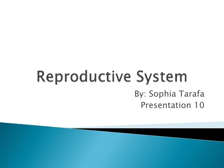 Reproductive System<br />By: Sophia Tarafa<br />Presentation 10<br />