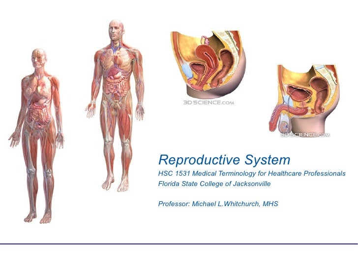 Reproductive SystemHSC 1531 Medical Terminology for Healthcare ProfessionalsFlorida State College of JacksonvilleProfessor...