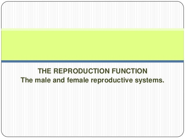 THE REPRODUCTION FUNCTION The male and female reproductive systems.