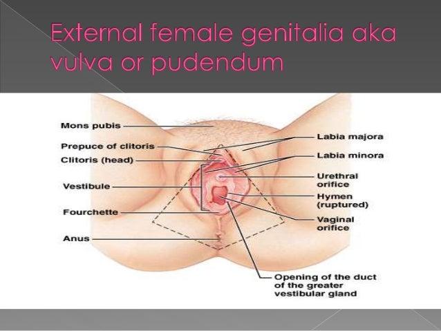 Urethral orifice into the anus picture 348