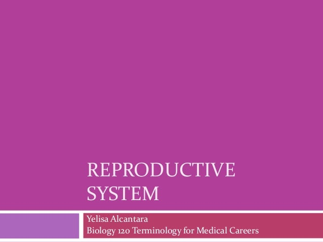 REPRODUCTIVE SYSTEM Yelisa Alcantara Biology 120 Terminology for Medical Careers