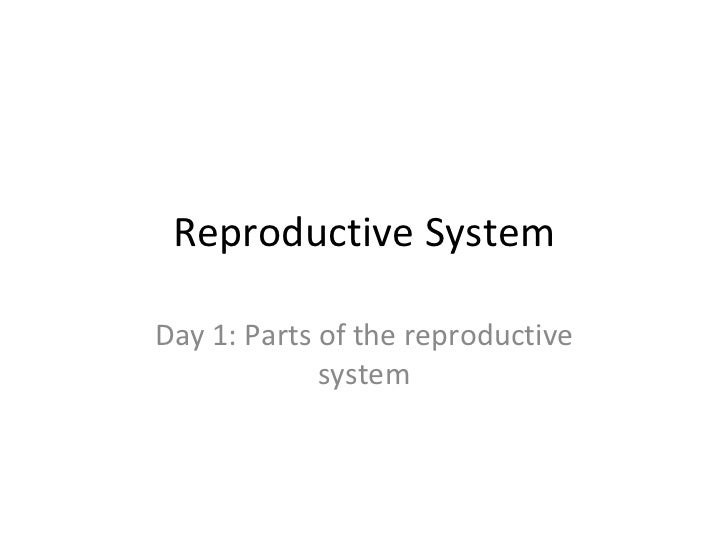 Reproductive System Day 1: Parts of the reproductive system