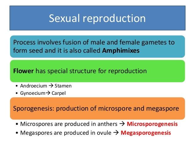 Microsporogenesis • Anther has 4 pollen sacs, with numerous pollen mother cells (PMCs) meiosis • Each PMC-------- 4 haplo...