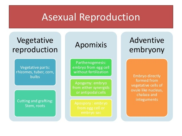 Role of apomixes in plant breeding Rapid production of pure lines Maintenance of superior genotypes Conservation of hetero...
