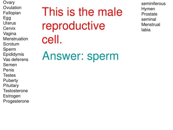 Ovary                             seminiferousOvulation                         HymenFallopianEgg               This is th...