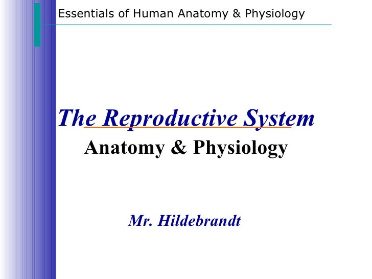 Essentials of Human Anatomy & PhysiologyThe Reproductive System    Anatomy & Physiology           Mr. Hildebrandt
