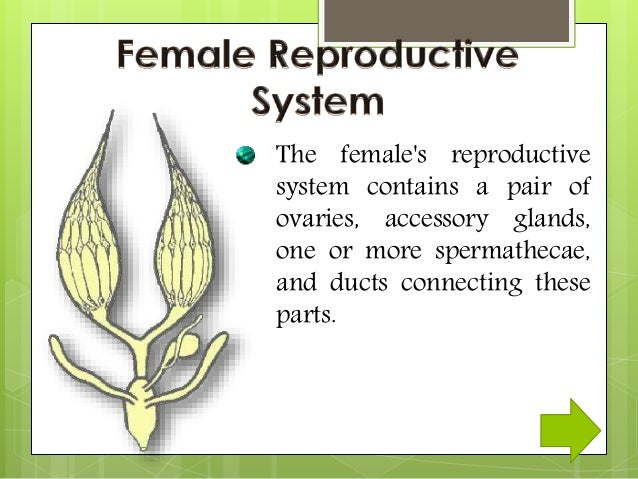 Reproductive system of eartworms and insects 11 ccuart Image collections