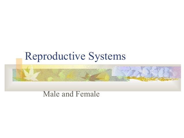 Reproductive Systems Male and Female