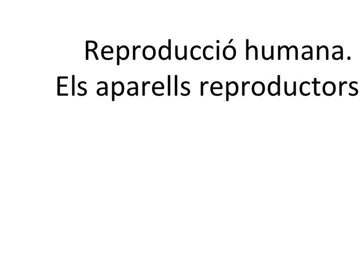 Reproducció humana.  Els aparells reproductors