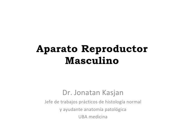 Aparato Reproductor Masculino Dr. Jonatan Kasjan Jefe de trabajos prácticos de histología normal y ayudante anatomía patol...