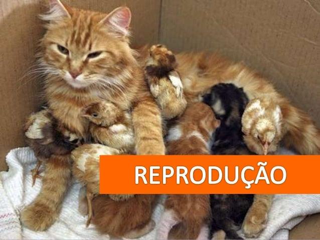 Para que serve a reprodução?