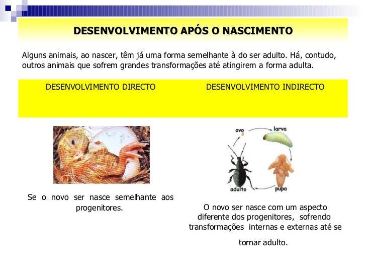 DESENVOLVIMENTO APÓS O NASCIMENTO Alguns animais, ao nascer, têm já uma forma semelhante à do ser adulto. Há, contudo, out...