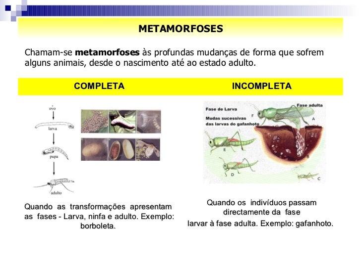 METAMORFOSES Chamam-se  metamorfoses  às profundas mudanças de forma que sofrem alguns animais, desde o nascimento até ao ...