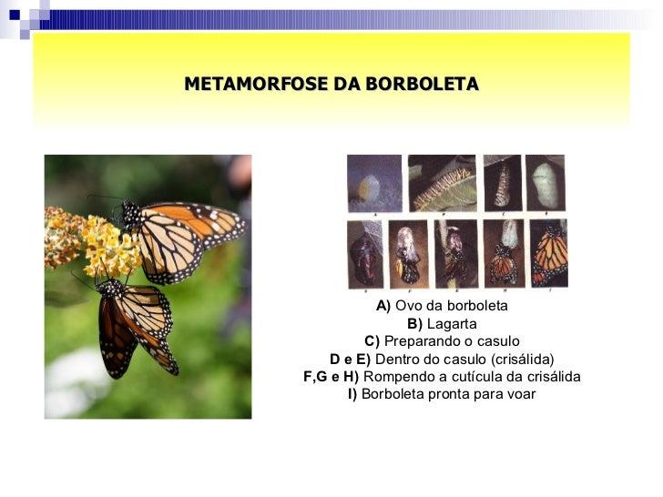 METAMORFOSE DA BORBOLETA A)  Ovo da borboleta  B)  Lagarta  C)  Preparando o casulo  D e E)  Dentro do casulo (crisálida) ...