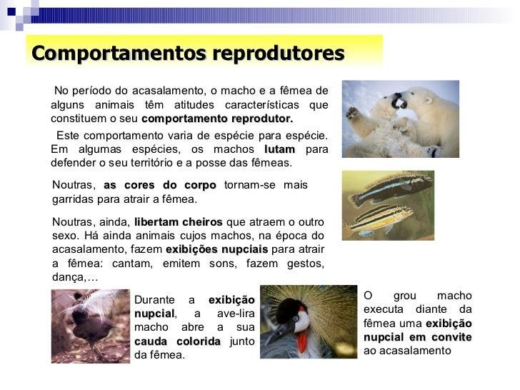 Comportamentos reprodutores <ul><li>No período do acasalamento, o macho e a fêmea de alguns animais têm atitudes caracterí...