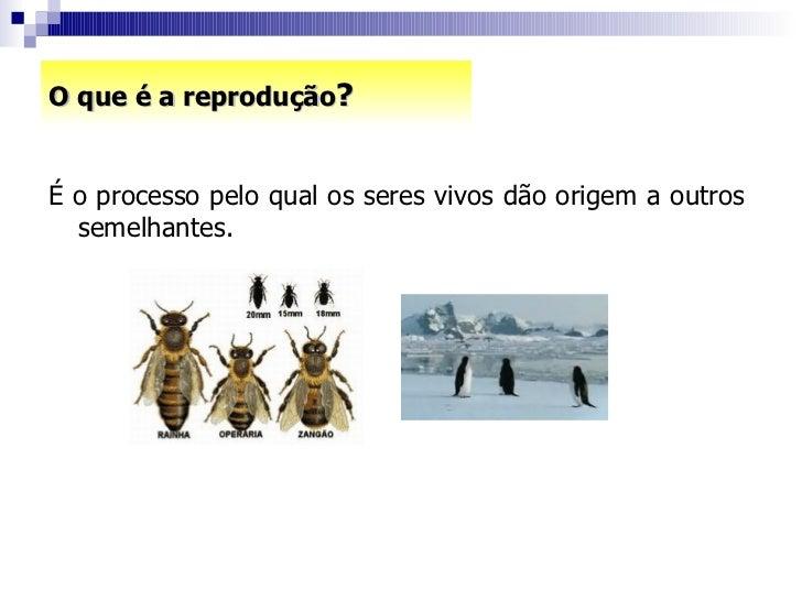 O que é a reprodução ? <ul><li>É o processo pelo qual os seres vivos dão origem a outros  semelhantes. </li></ul>