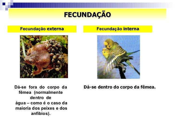 FECUNDAÇÃO <ul><li>Fecundação  externa </li></ul>Dá-se  fora  do  corpo  da  fêmea  (normalmente  dentro  de  água – como ...