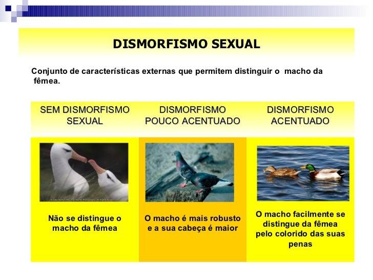 DISMORFISMO SEXUAL <ul><li>Conjunto de características externas que permitem distinguir o  macho da fêmea.  </li></ul>O ma...