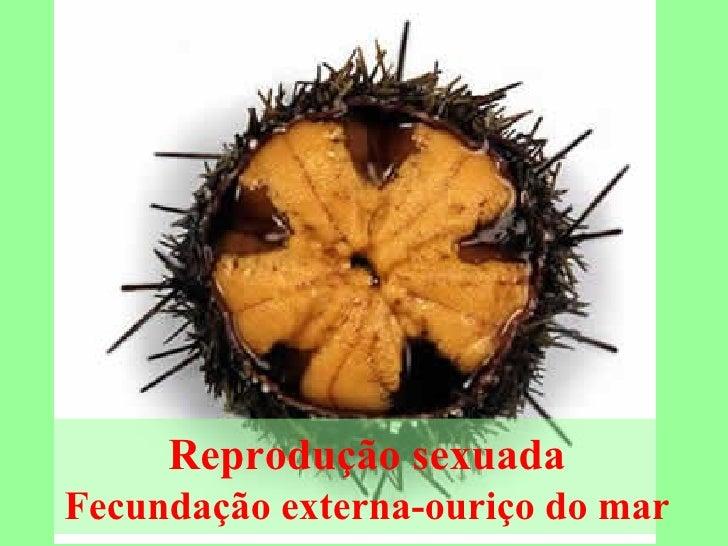 Reprodução sexuada Fecundação externa-ouriço do mar