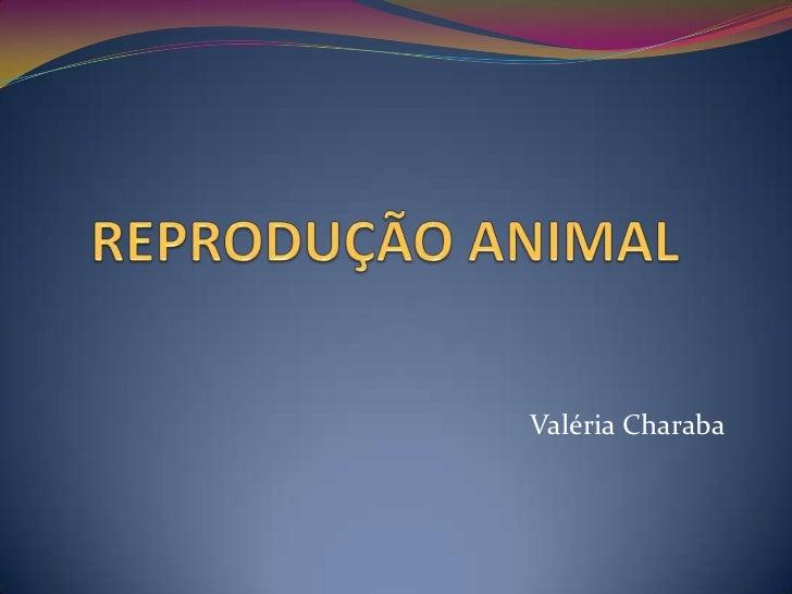 Reprodução animal   valéria