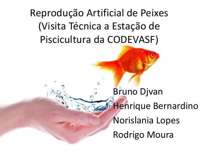 Reprodução Artificial de Peixes (Visita Técnica a Estação de Piscicultura da CODEVASF) Bruno Djvan Henrique Bernardino Nor...