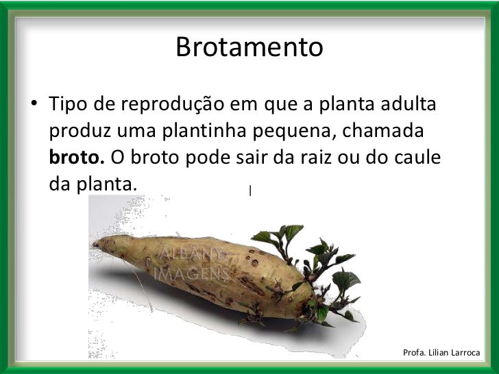 Reprodu o das plantas for Que se planta en septiembre