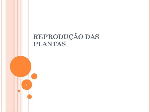 REPRODUÇÃO DAS PLANTAS 1