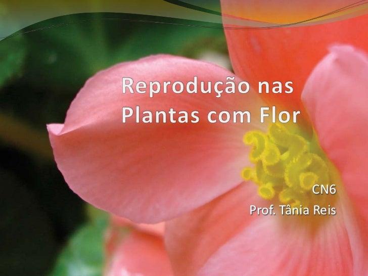 Reproduçãonas Plantas comFlor<br />CN6<br />Prof. Tânia Reis<br />