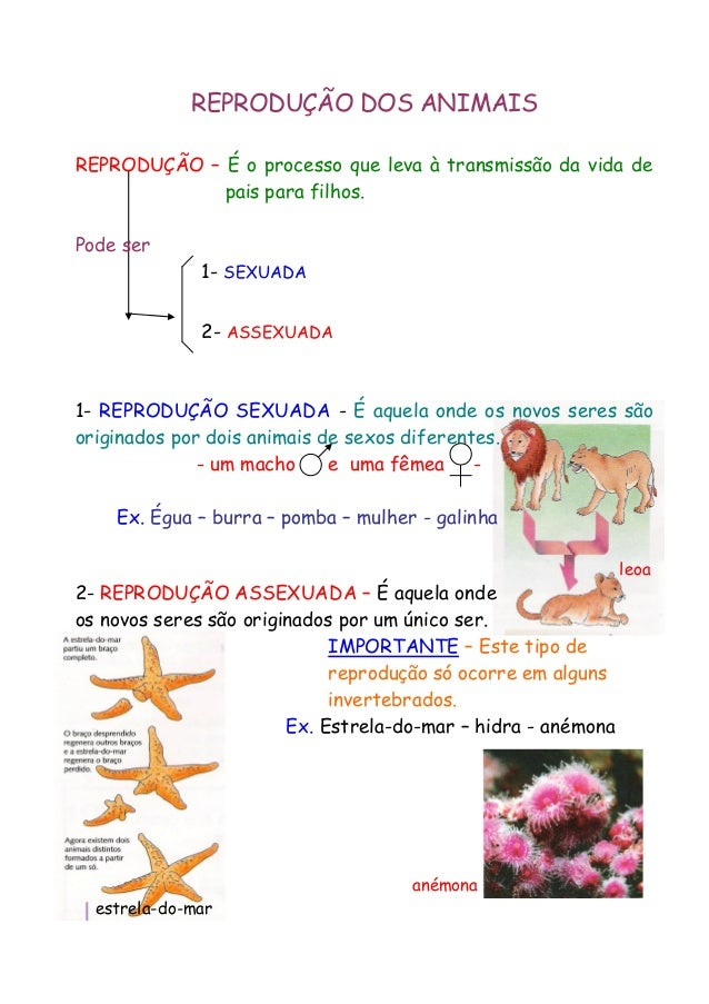 REPRODUÇÃO DOS ANIMAIS REPRODUÇÃO – É o processo que leva à transmissão da vida de pais para filhos. Pode ser 1- SEXUADA 2...
