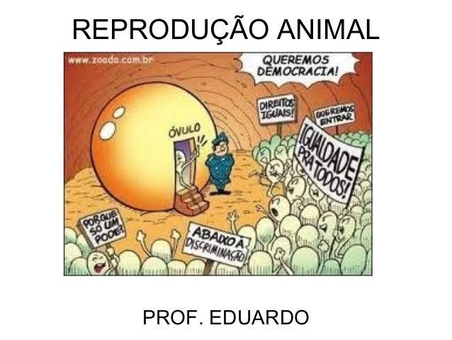 REPRODUÇÃO ANIMAL   PROF. EDUARDO