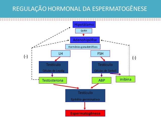 ciclo de testosterona boldenona y estanozolol