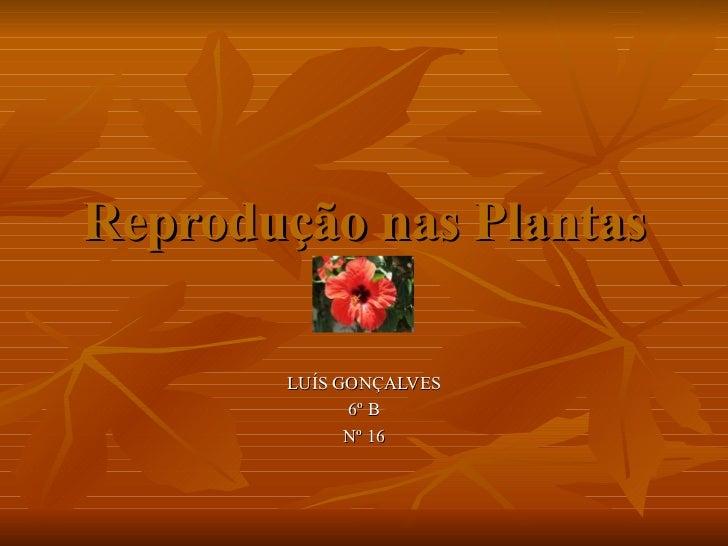 Reprodução nas Plantas LUÍS GONÇALVES 6º B Nº 16