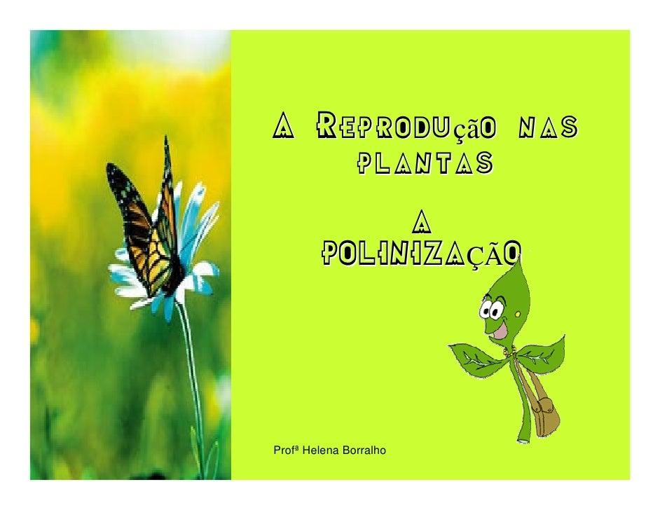 A Reprodução nas     plantas              A         POLINIZAÇÃO     Profª Helena Borralho