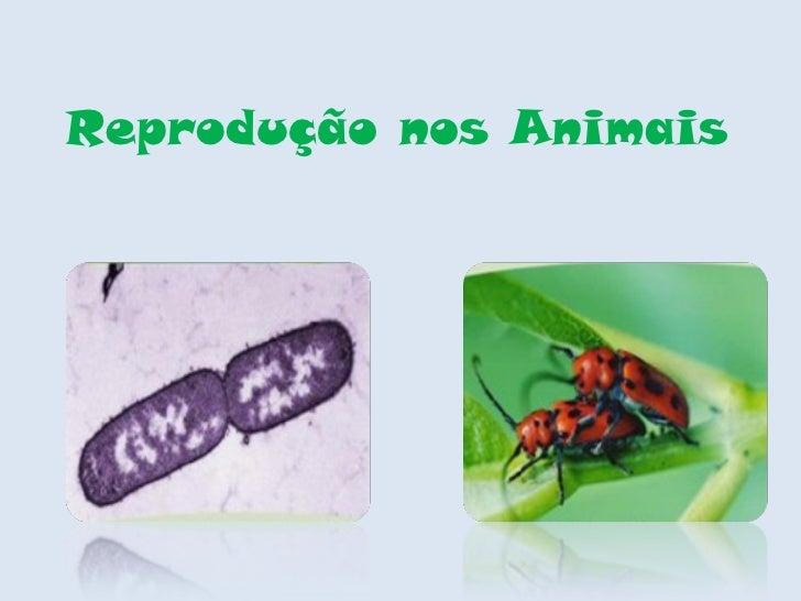 Reprodução nos Animais