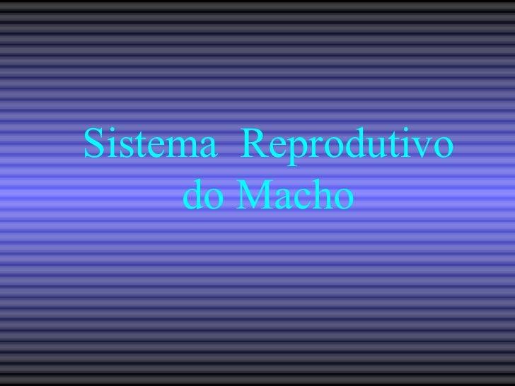 Sistema  Reprodutivo do Macho