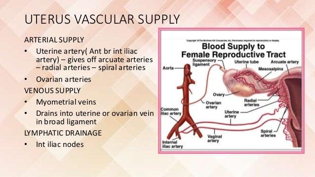 Anatomy of radial artery