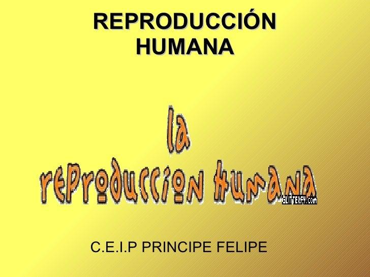 REPRODUCCIÓN HUMANA C.E.I.P PRINCIPE FELIPE
